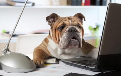 Kutya az irodában? Az irodai kutyák előnye és hátránya